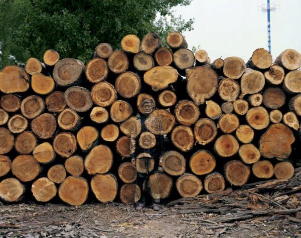 刘勃麟《伐木场》