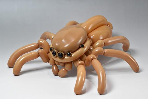 Masayoshi_jumping-spider