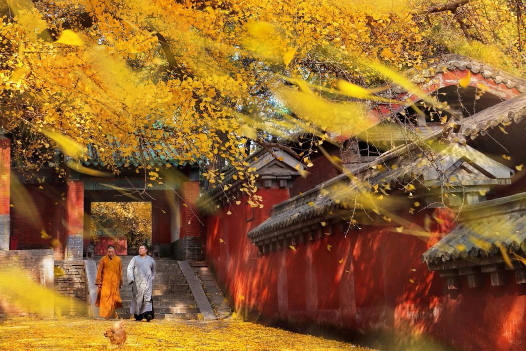 胡虹 (Hong Hu), Culture (Zhengzhou, Henan)
