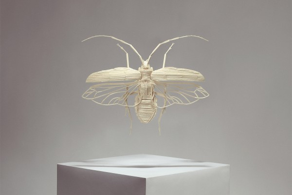 insect-2-600x400