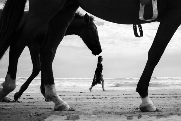 Horse-1-640x427@2x
