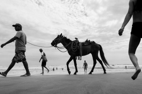 levy-horse-2-640x427@2x